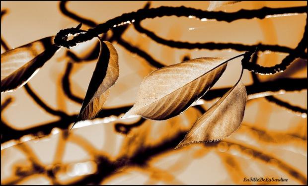 Feuillage d'automne 1