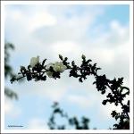 vision de printemps 2